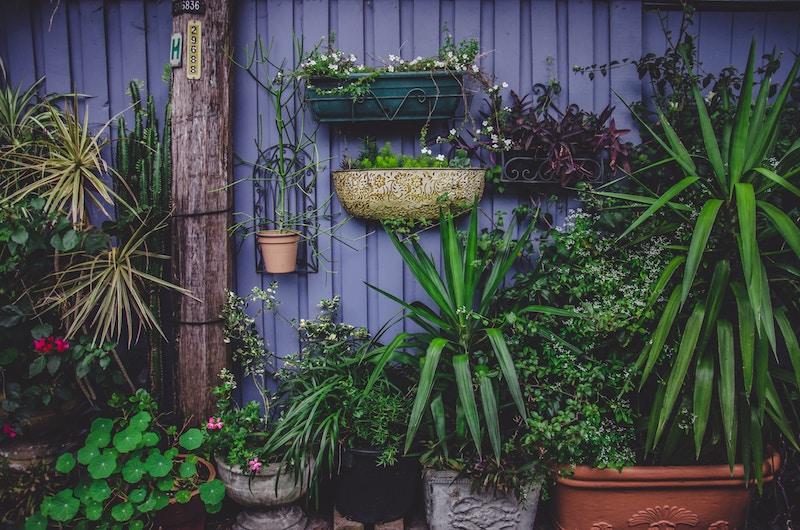Healing plants, green garden