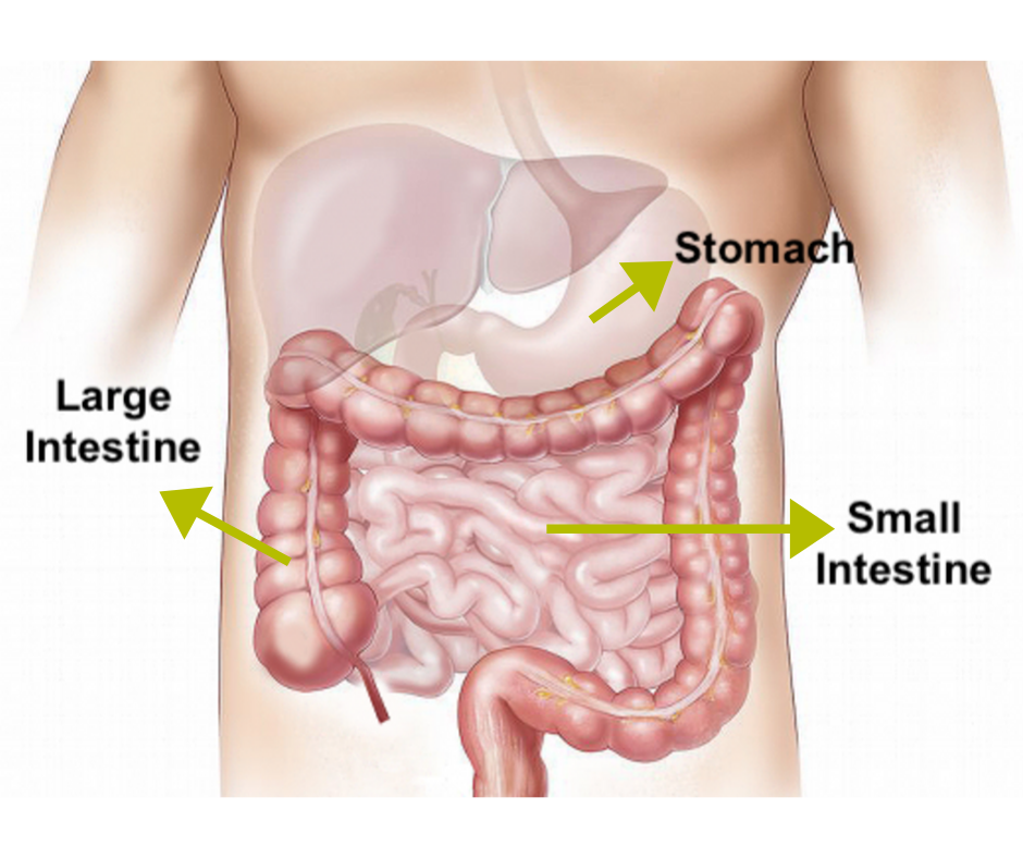 Chronic constipation -  Digestive tract